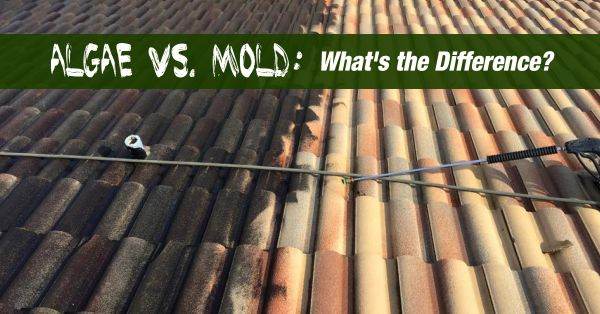 Algae Vs Mold What S The Difference Window Genie Blog