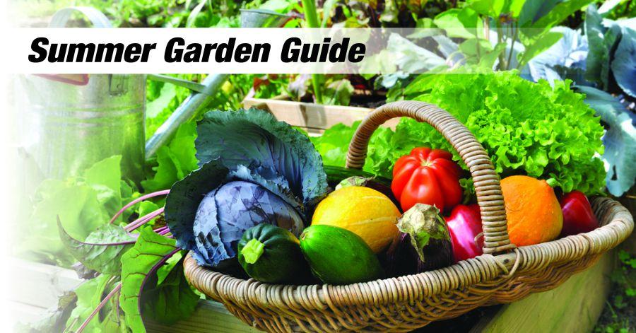 Summer Garden Guide