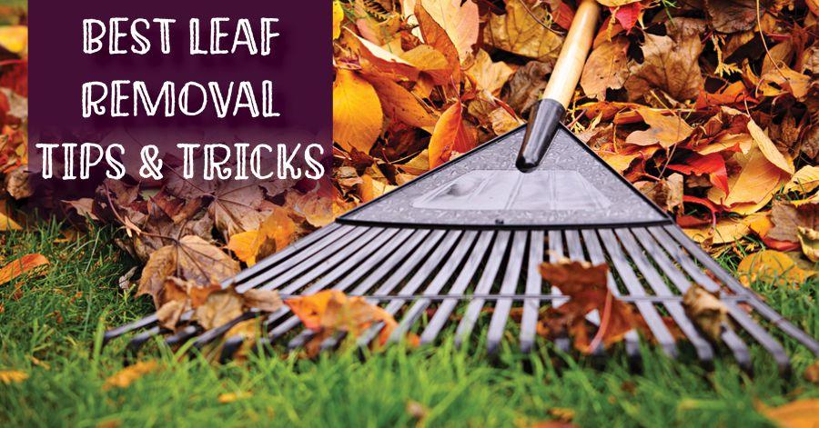leaf-removal-blog-pic