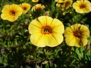 Ready Set Plant Best Flowers To Plant In April Window Genie Blog