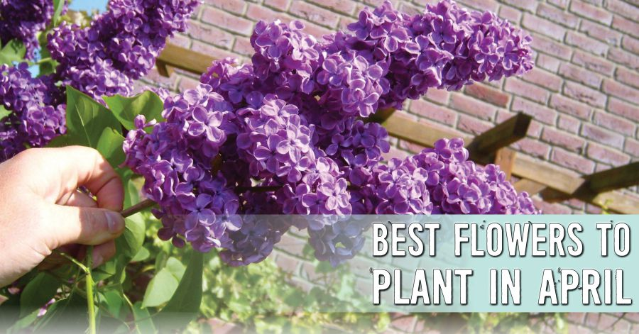 Ready set plant best flowers to plant in april window - Vegetable garden what to plant in april ...