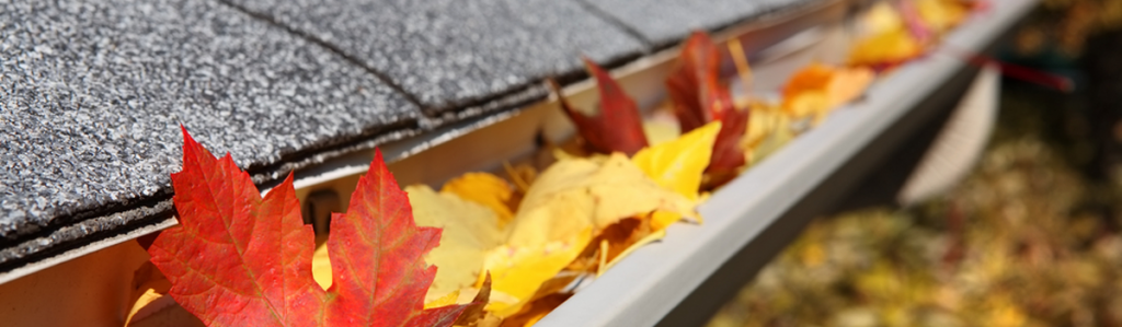a gutter full of Autumn leaves