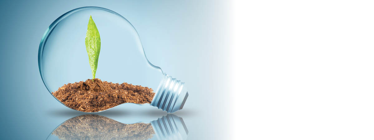 lightbulb with seedling and dirt inside